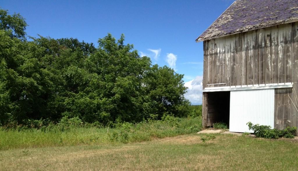 Barn Summer