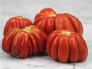 Gezahnte Tomato