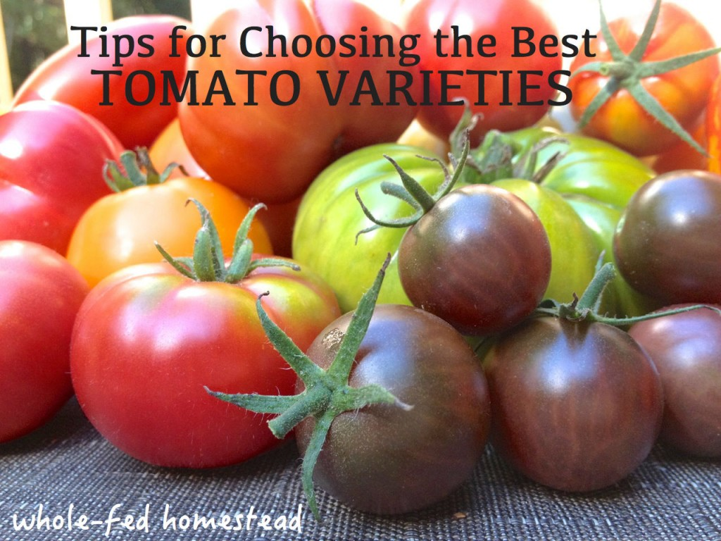 Tips for Choosing the Best Tomato Varieties w Words