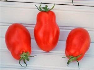 Tomato Martinos Roma