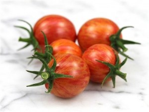 Tomato Pink Bumblebee