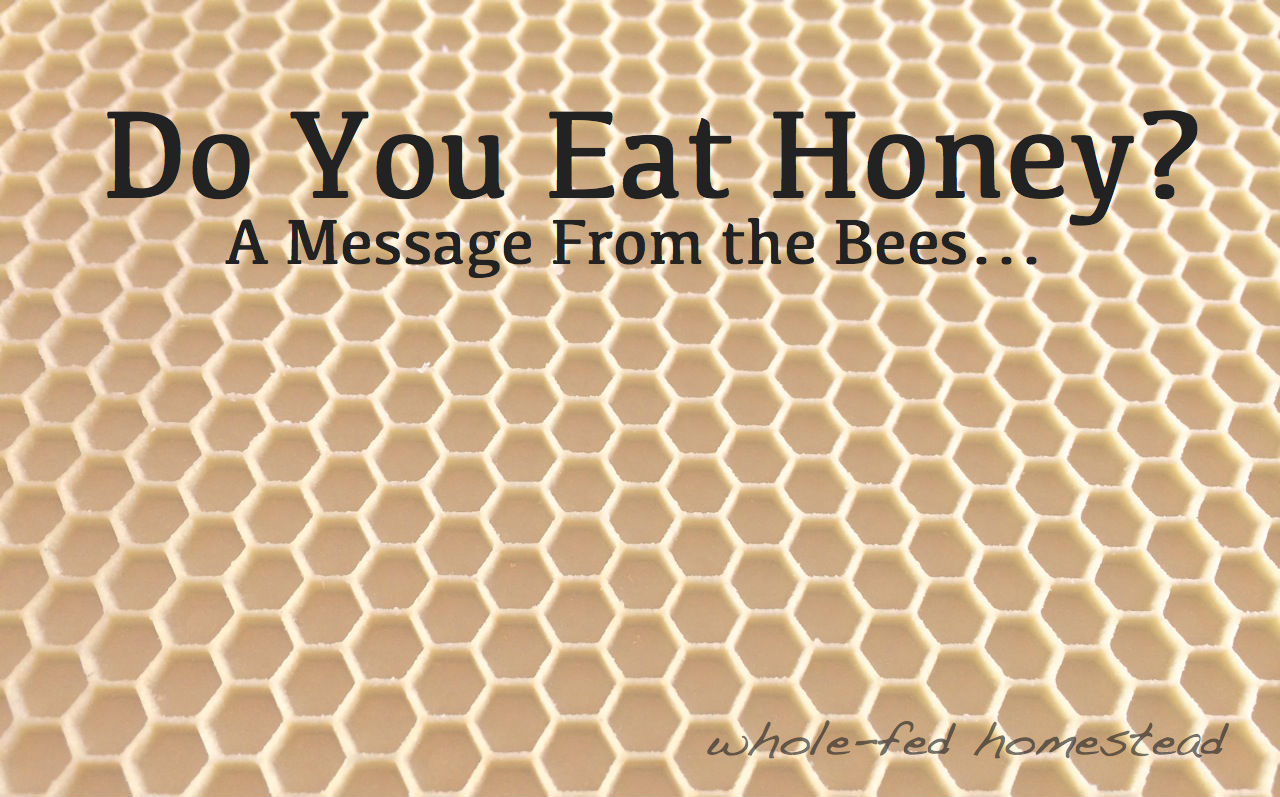 Do You Eat Honey? A Message From the Bees…