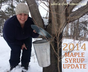 maple syrup wisonsin minnesota box elder syrup