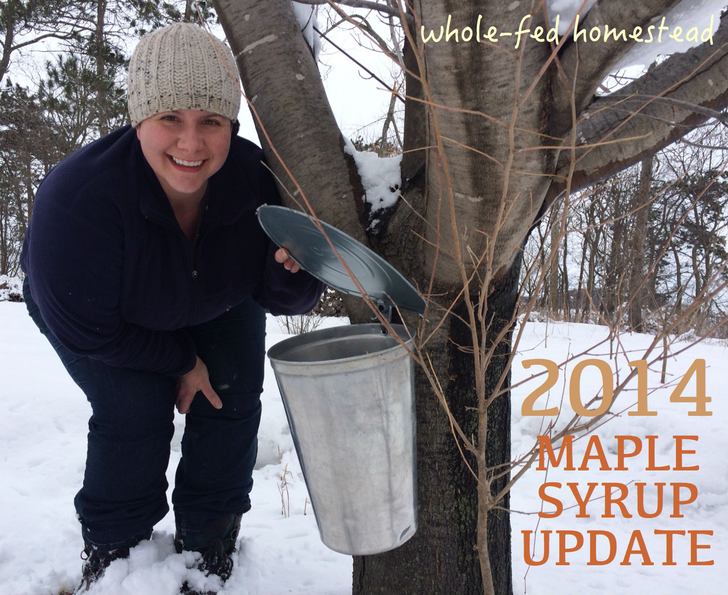 2014 Maple Syruping Update