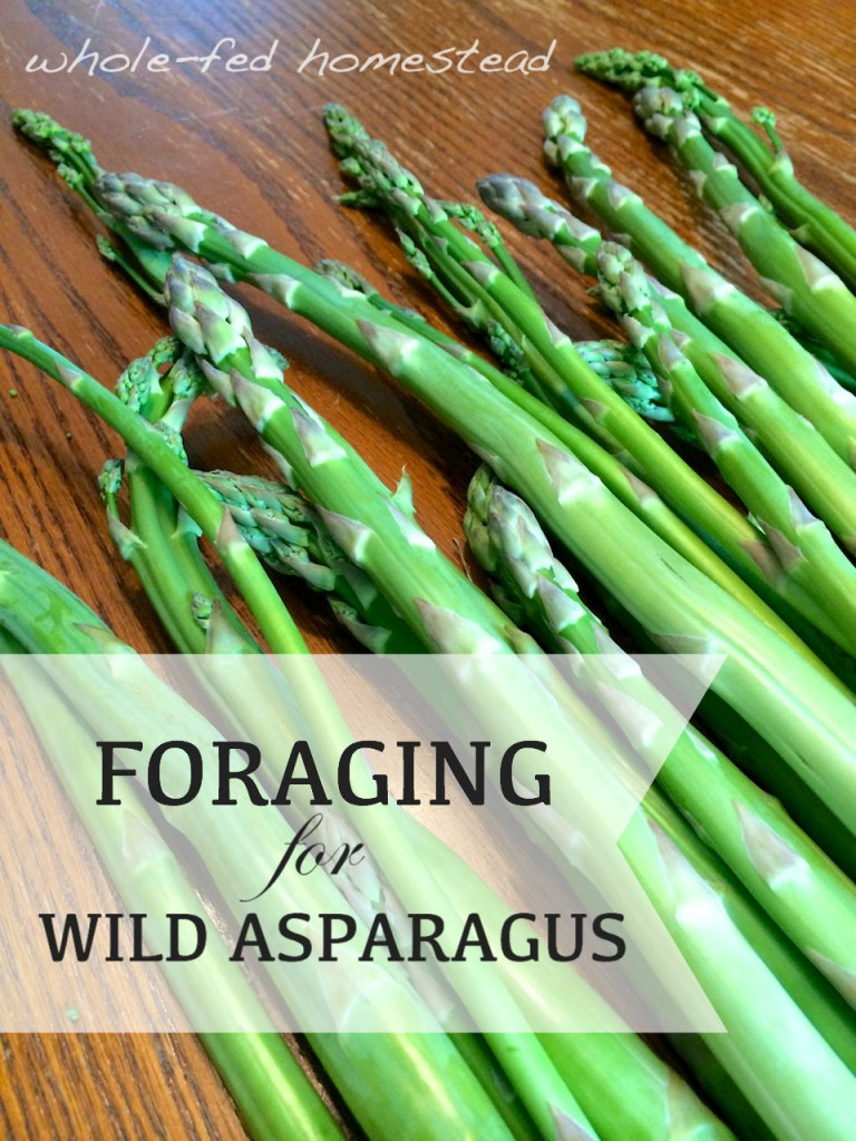 foraging asparagus w words