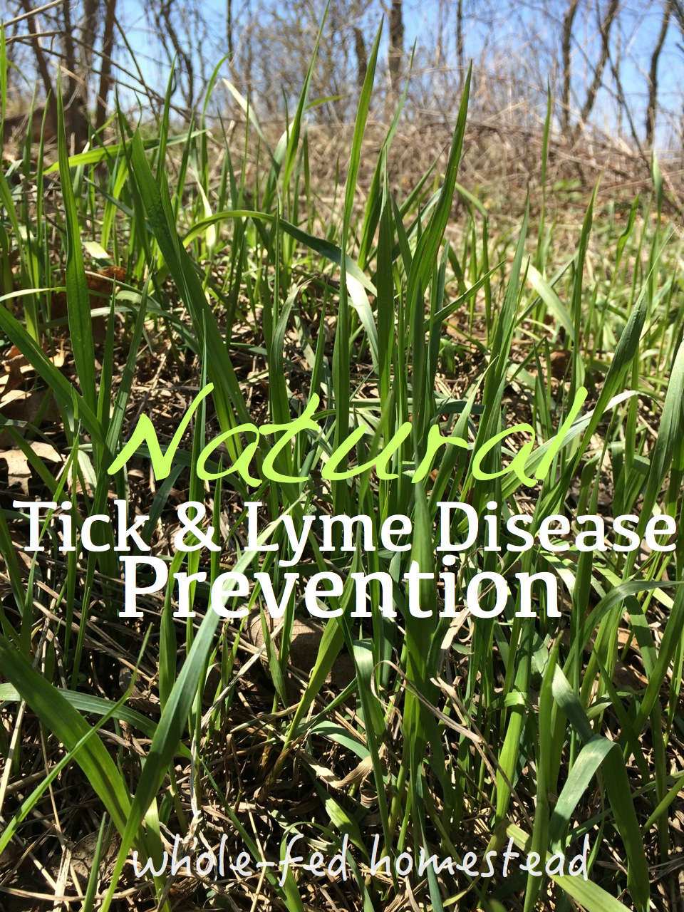 Natural Tick & Lyme Disease Prevention