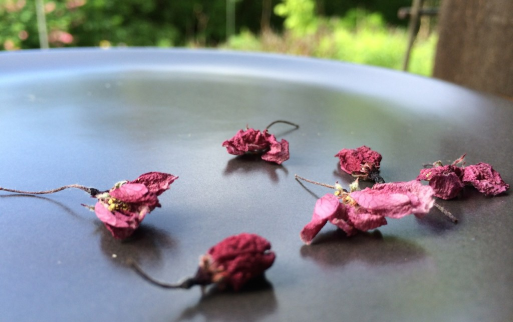 dried apple blossoms