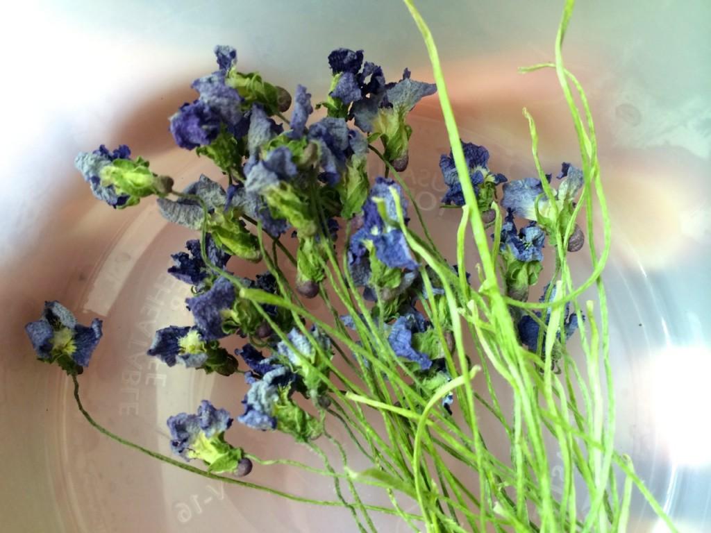 dried violets in jar