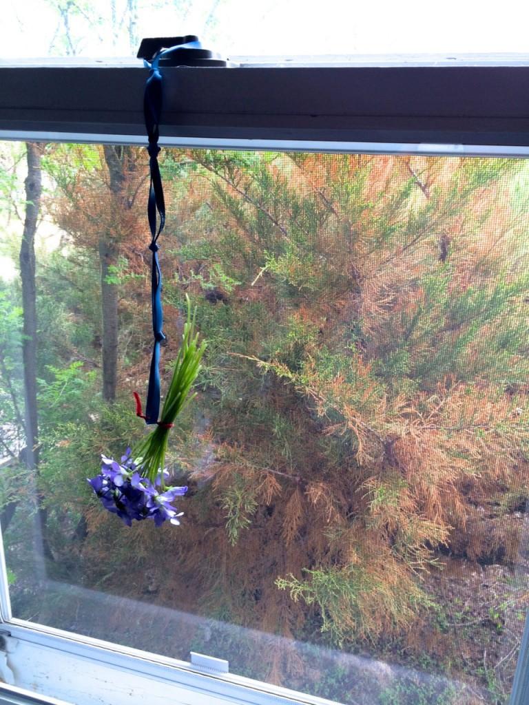 hanging violets