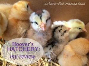 Hoover's Hatchery: My Review