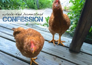 Homestead Confession: We Have Two Chickens Living In Our House