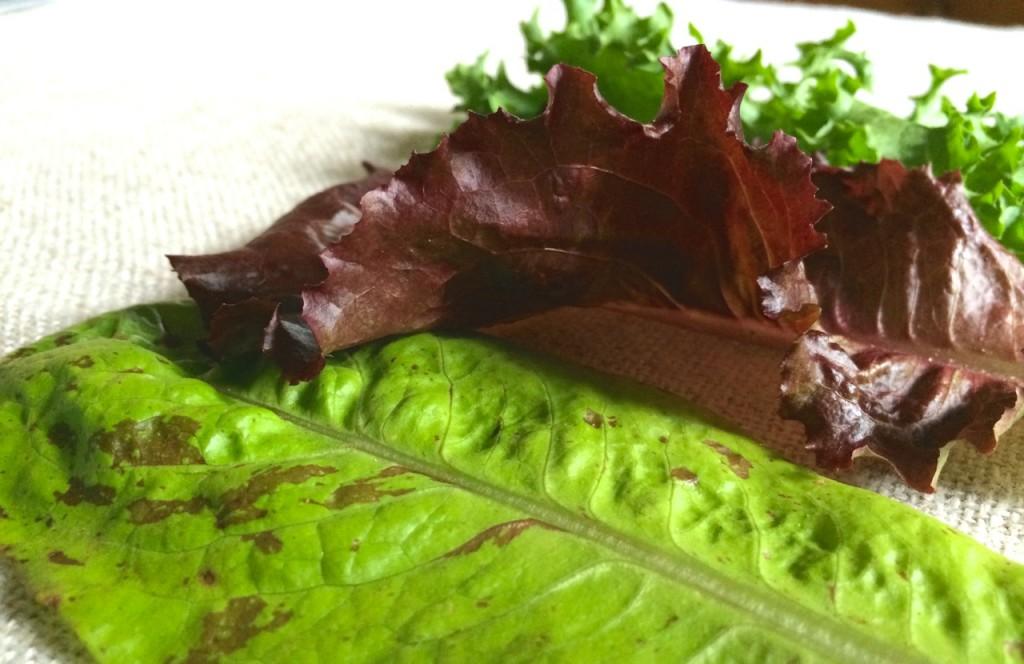 three lettuces