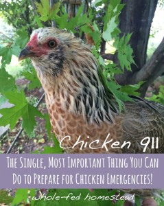 The Single, Most Important Thing You Can Do to Prepare for Chicken Emergencies!