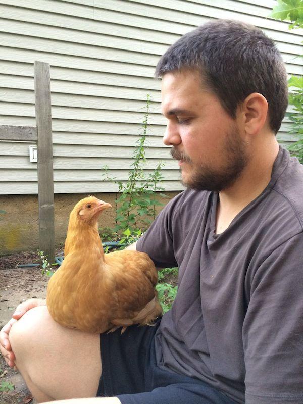 karl buff chicken