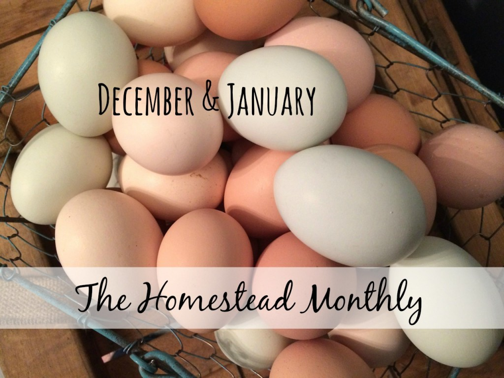 Homestead monthly december january, Whole Fed Homestead