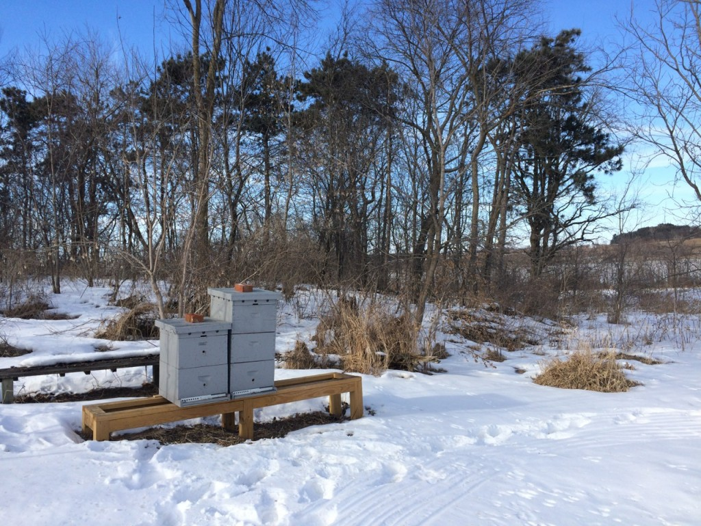 Bees in winter, Whole-Fed Homestead: The Homestead Monthly: February & March- a farm update.