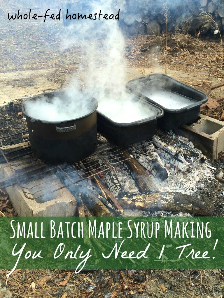 Maple Boiling: Small Batch Maple Syrup-Making: You Only Need 1 Tree! How to make maple syrup at home without sugar maples. Whole-Fed Homestead