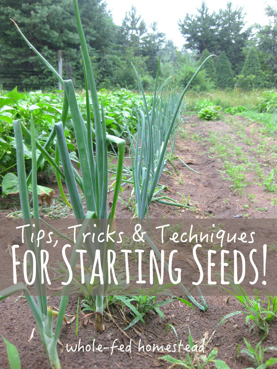 Tips, Tricks and Techniques for Starting Seeds Feature