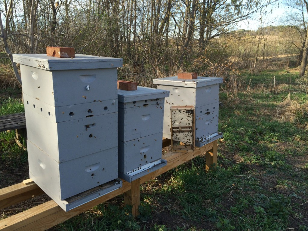 Bees spring 2015