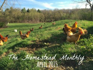 The Homestead Monthly: April
