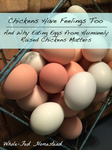 Chickens Have Feelings Too + Why Eating Eggs from Humanely Raised Chickens Matters