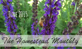June homestead photo feature