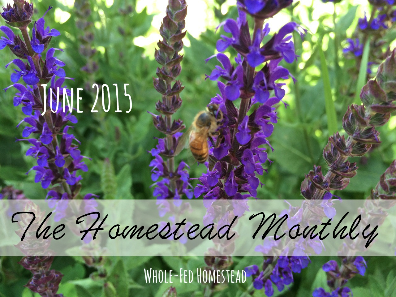 Homestead Monthly: June 2015