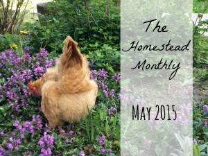 Homestead Monthly: May 2015