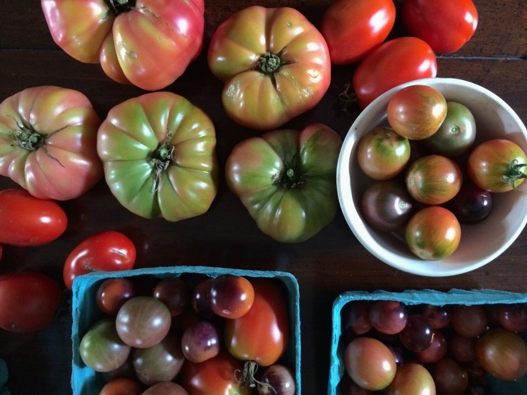 Beautiful tomatoes, What do I do with all these Cherry Tomatoes?! How to use up cherry tomatoes. | Whole-Fed Homestead