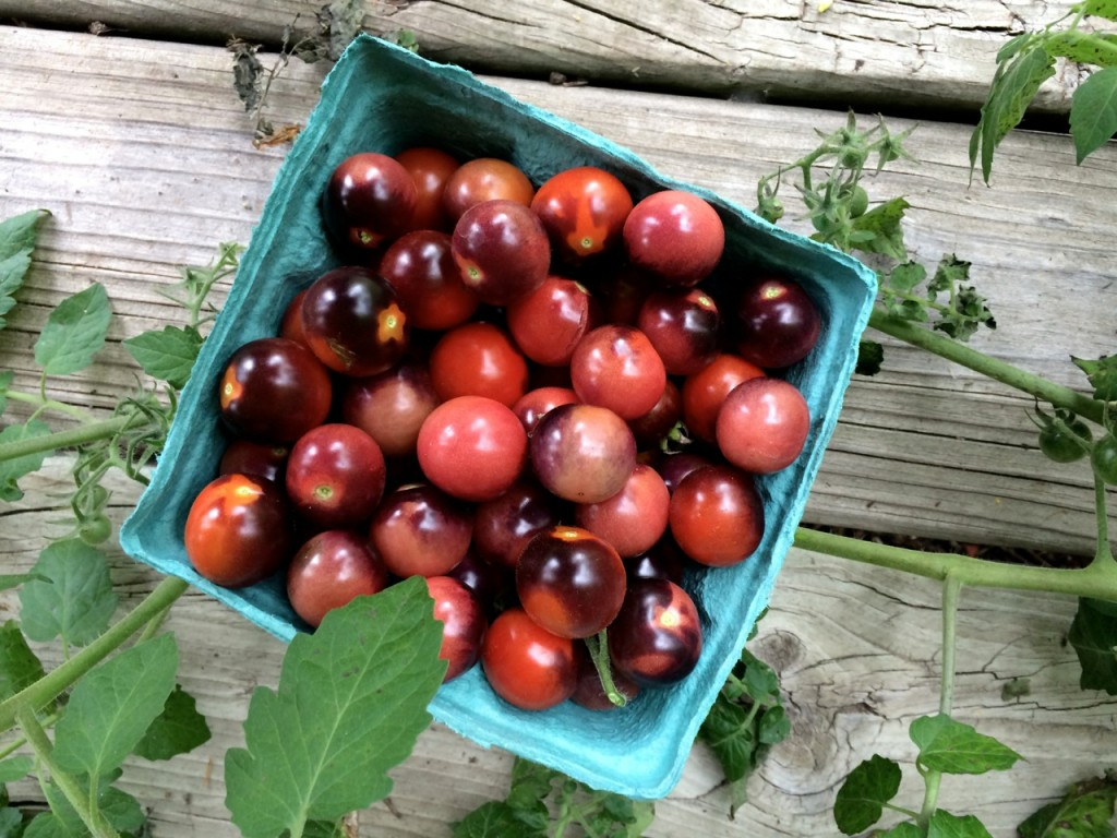 Blue berries cherry tomatoes, What do I do with all these Cherry Tomatoes?! How to use up cherry tomatoes. | Whole-Fed Homestead