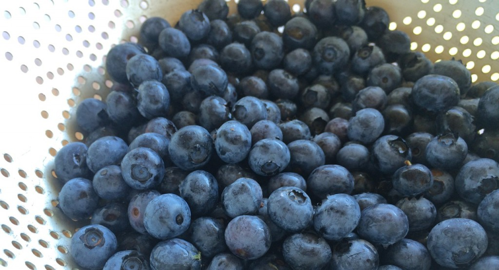 The Complete Guide to Preserving and Using Preserved Blueberries: How to dehydrate, freeze, can, and make jam from blueberries. | Whole-Fed Homestead