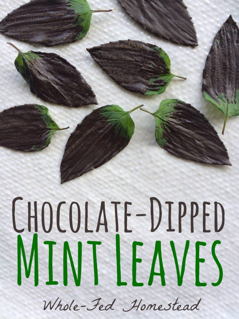 Chocolate-Dipped Mint Leaves... or, Chocolate After Dinner Mints Au Naturel {gluten-free, dairy-free, paleo, grain-free, healthy, vegetarian} | Whole-Fed Homestead