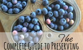 Complete Guide to Blueberries