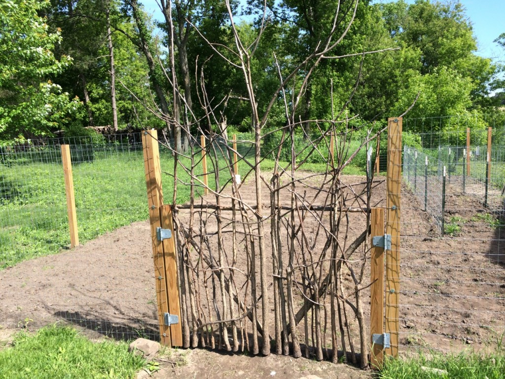 Garden gate early spring, How to build a rustic garden gate from scratch (for cheap!) using sticks and small trees. The ultimate repurposing to build a garden or orchard door! | Whole-Fed Homestead