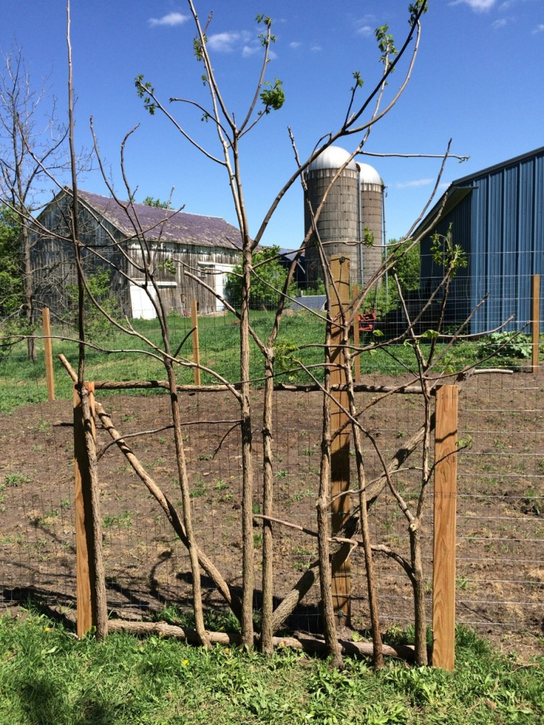 Garden gate lining up sticks, How to build a rustic garden gate from scratch (for cheap!) using sticks and small trees. The ultimate repurposing to build a garden or orchard door! | Whole-Fed Homestead