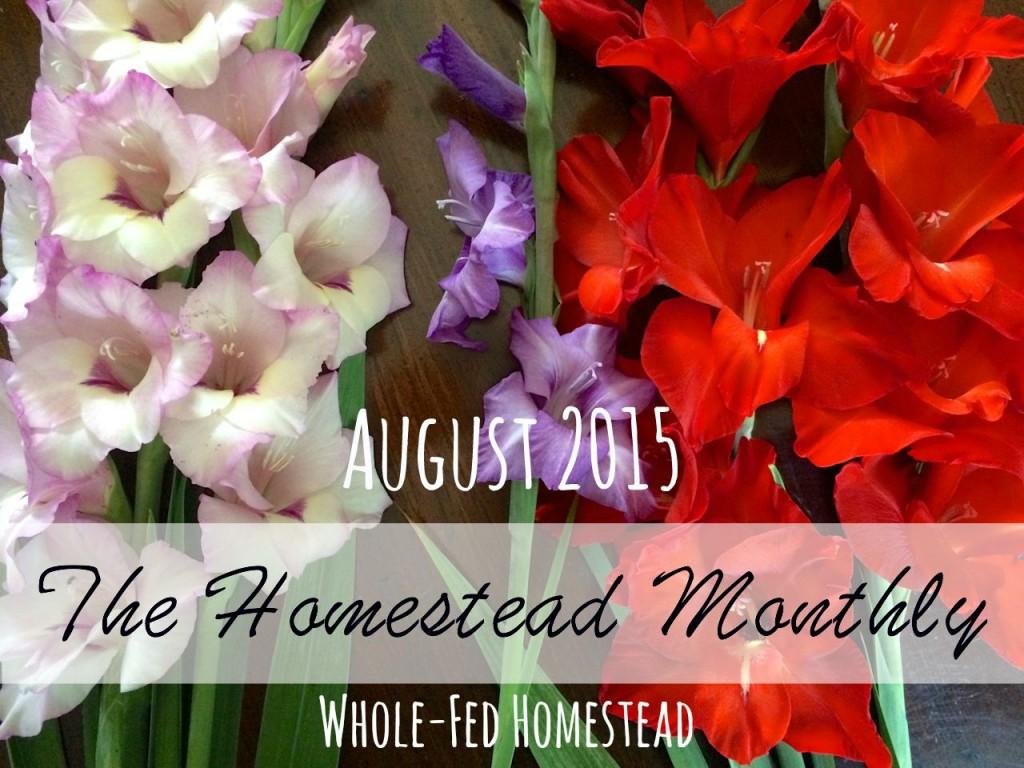 Homestead Monthly August 2015: chickens, ducks, turkeys, backyard garden, preserving the harvest, honey bees, and wild edibles!