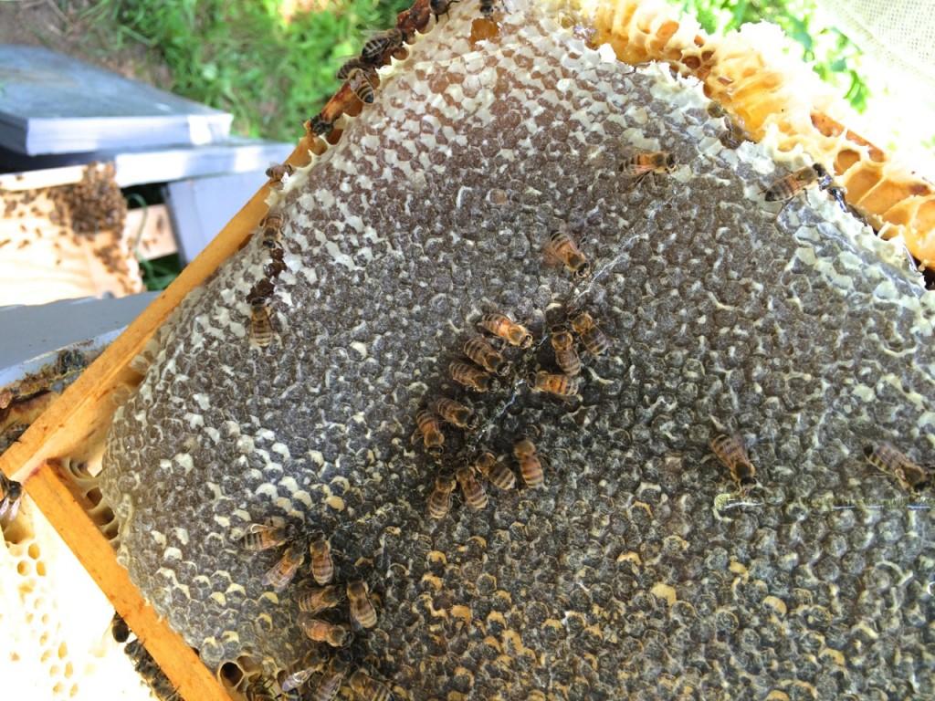Honey comb dripping
