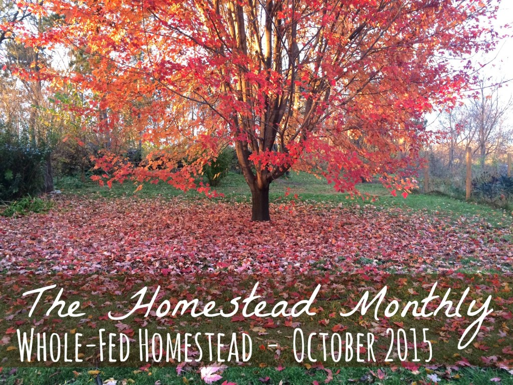 Homestead Monthly October 2015, Our monthly homestead update! Egg-famine, preserving the harvest, planting, and basket-making... there's always a lot happening on the homestead! Whole-Fed Homestead