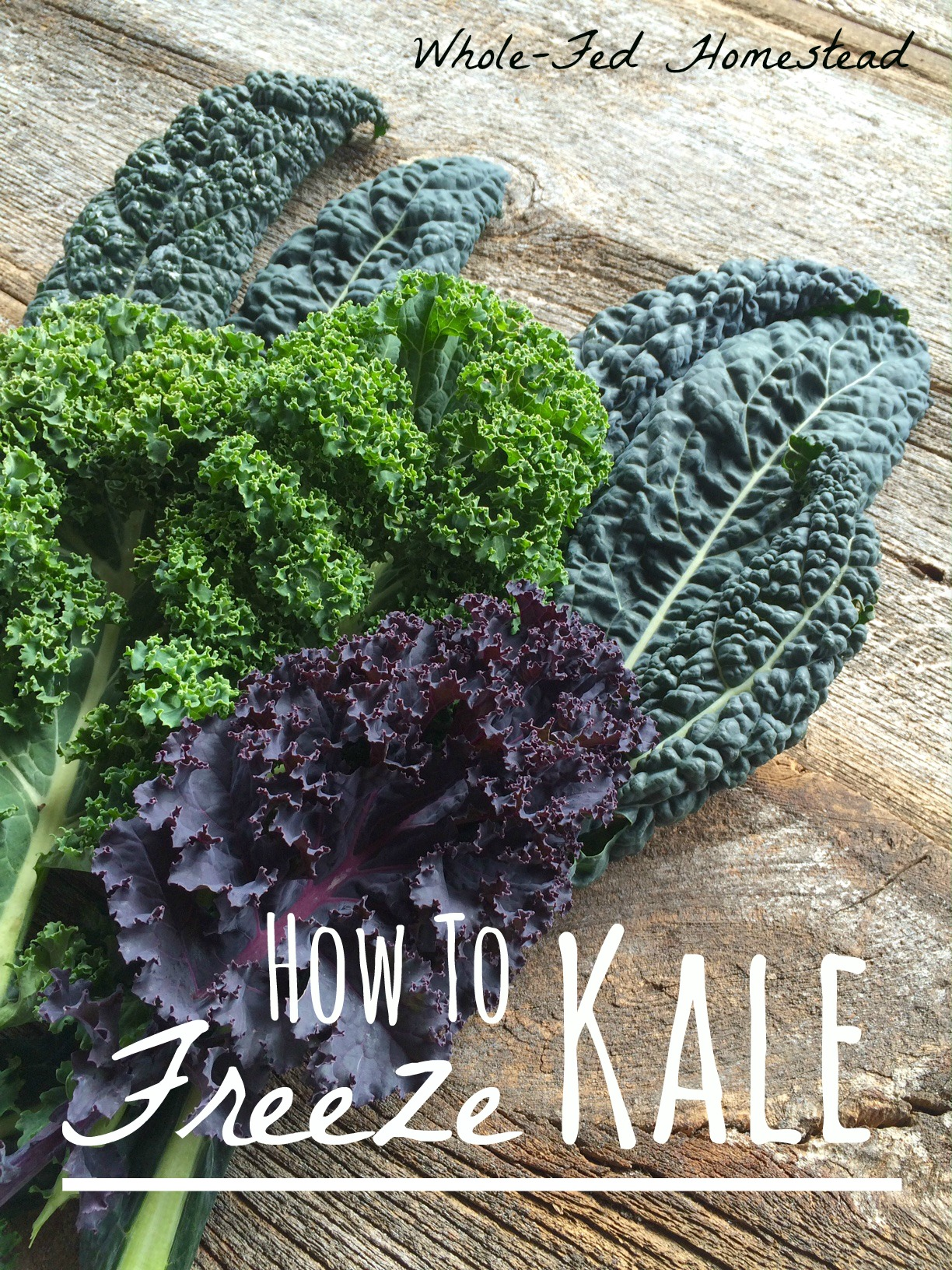 How to Freeze Kale Feature