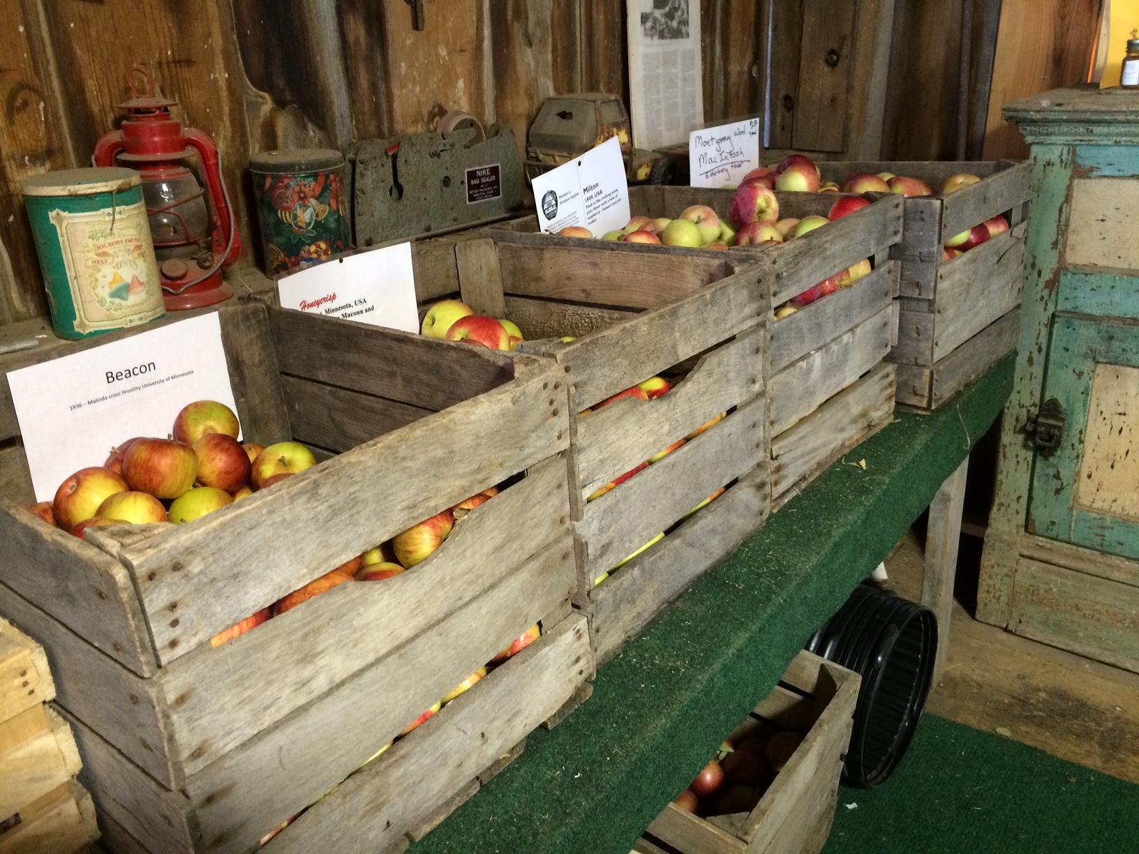 antique heirloom apple orchard