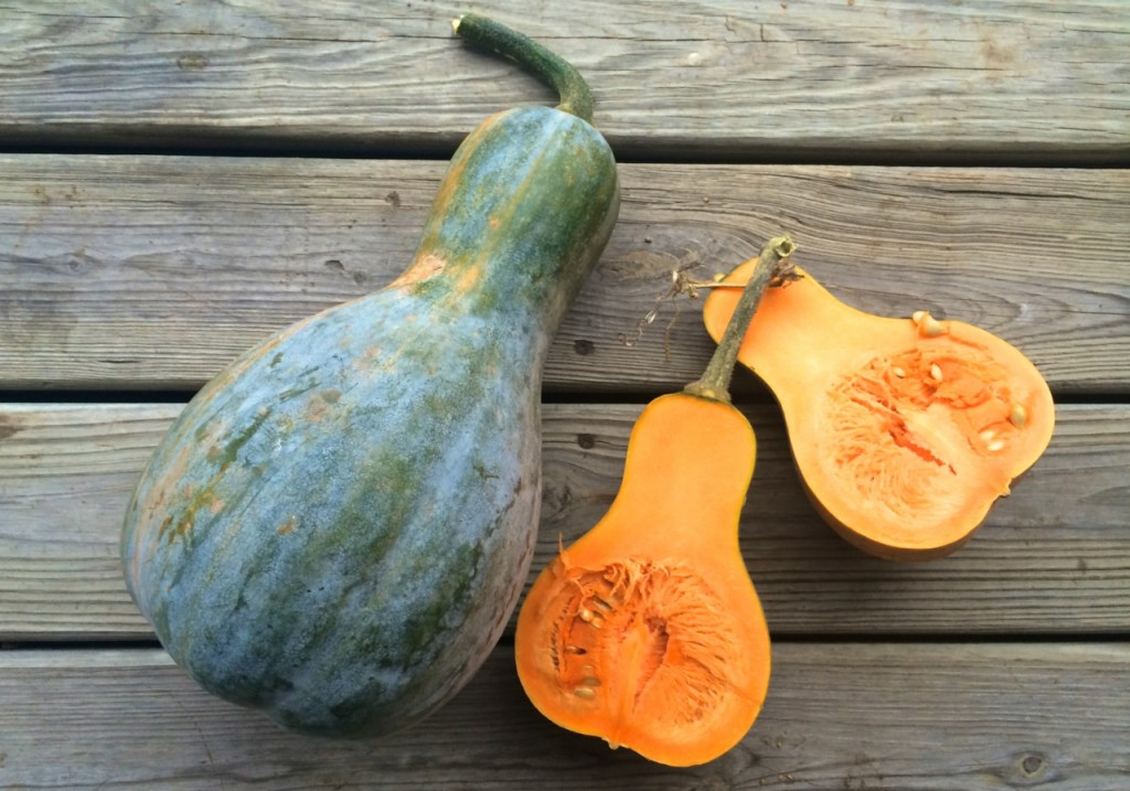 How to Roast Any Whole Squash, Including a No-Cut Method! | Whole-Fed Homestead