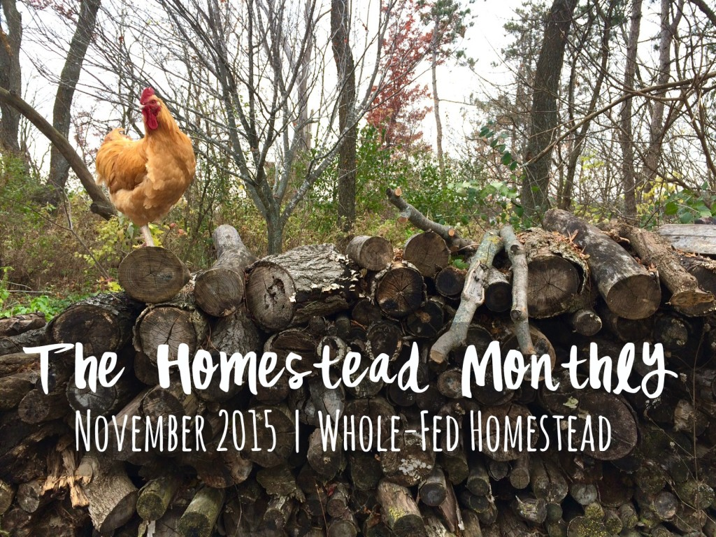 Whole-Fed Homestead Monthly Update November 2015 | Gardening - Chickens - Ducks - Foraging - Real Food