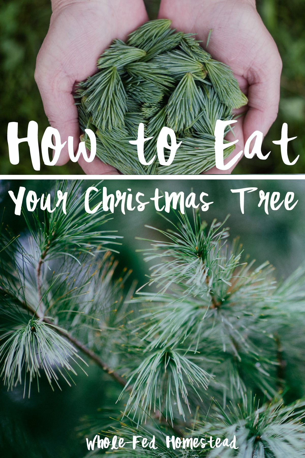 How to Eat Your Christmas Tree Feature