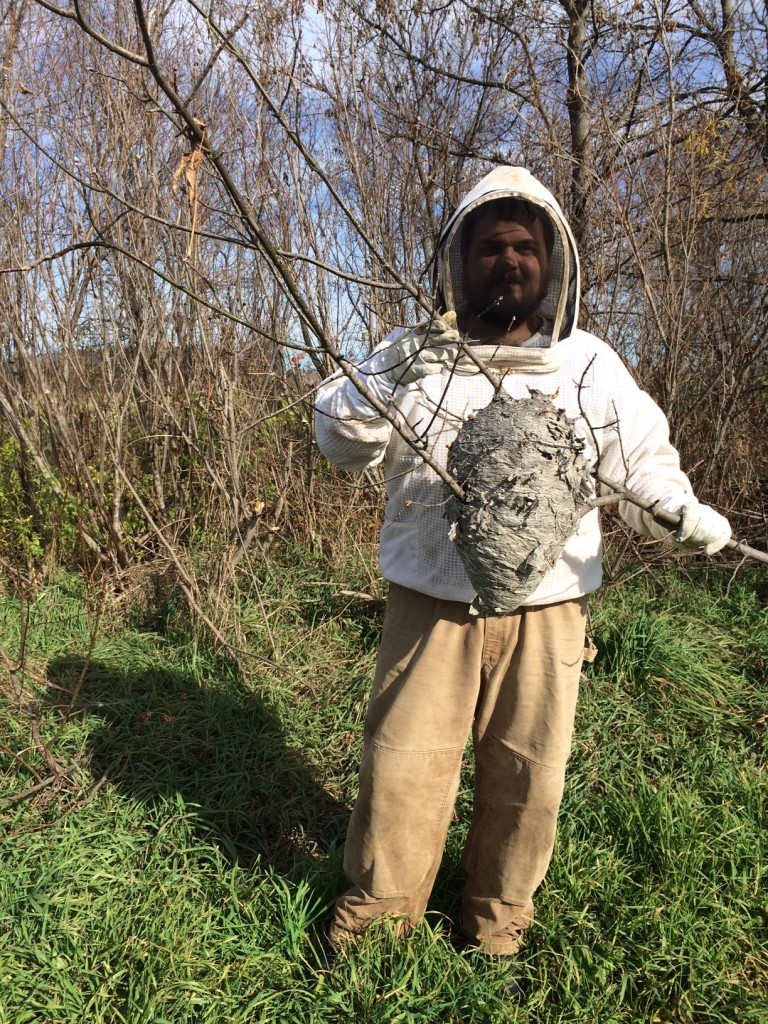 karl with hornet nest, Whole-Fed Homestead Monthly Update November 2015 | Gardening - Chickens - Ducks - Foraging - Real Food
