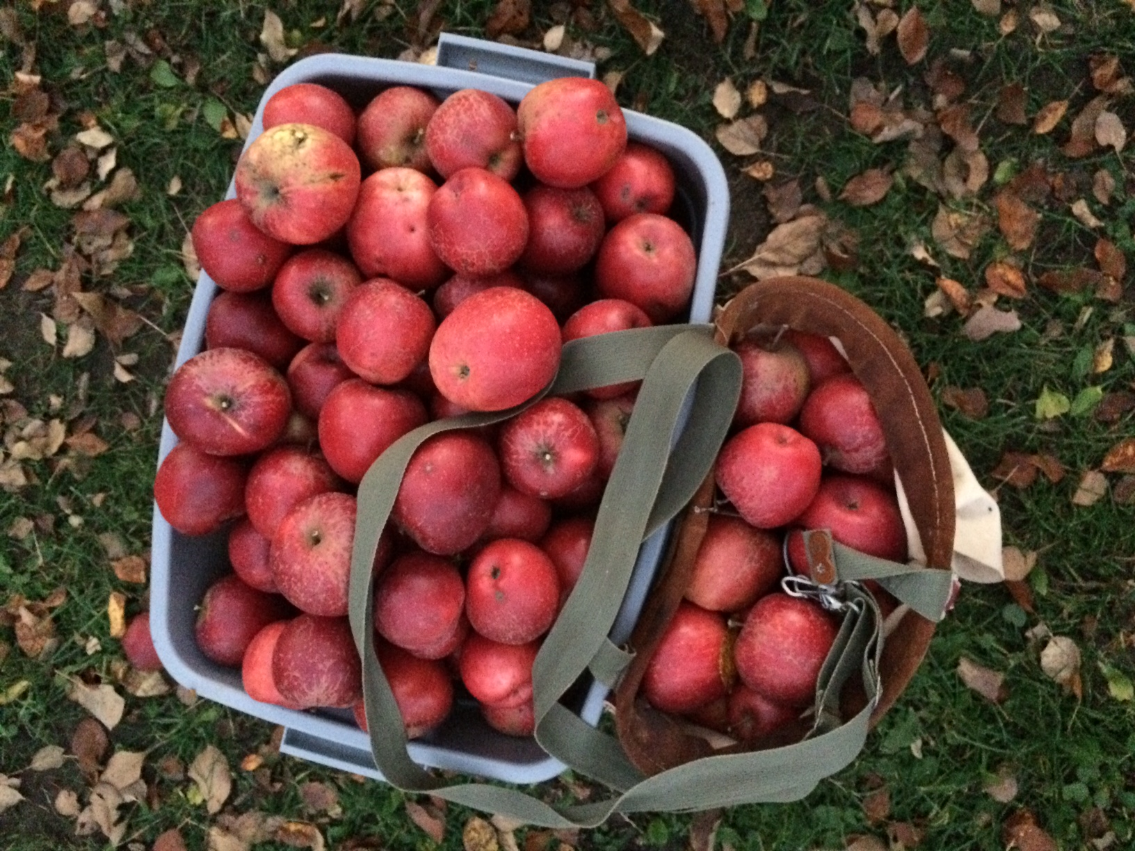 baskets bushels of apples