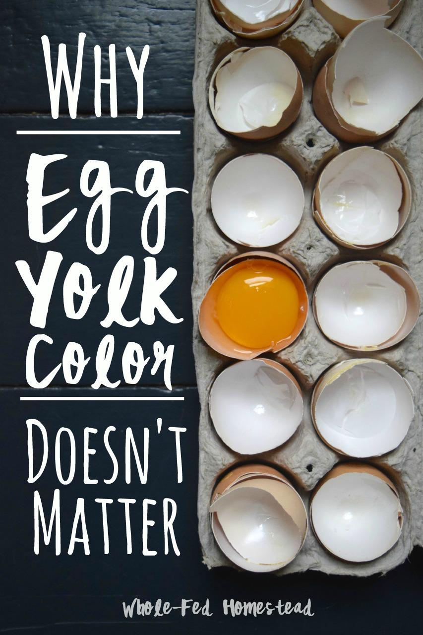 Why Egg Yolk Color Doesn't Matter