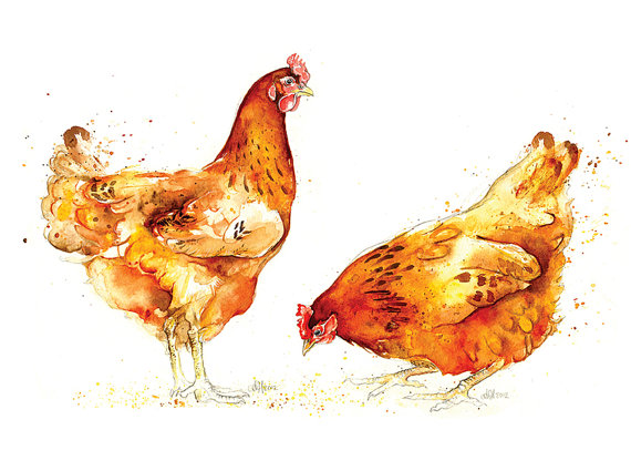 chicken watercolor