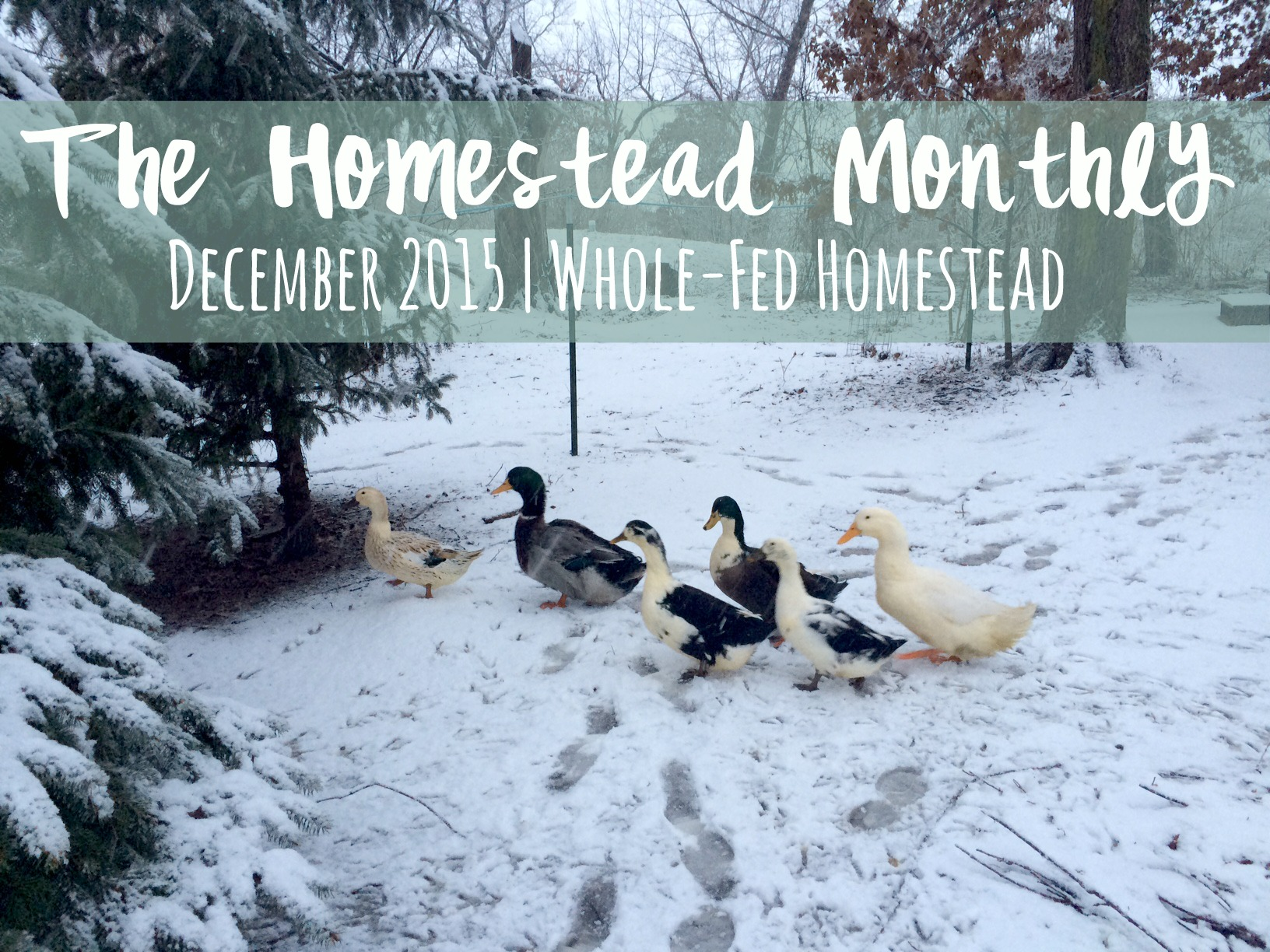 Homestead Monthly December 2015