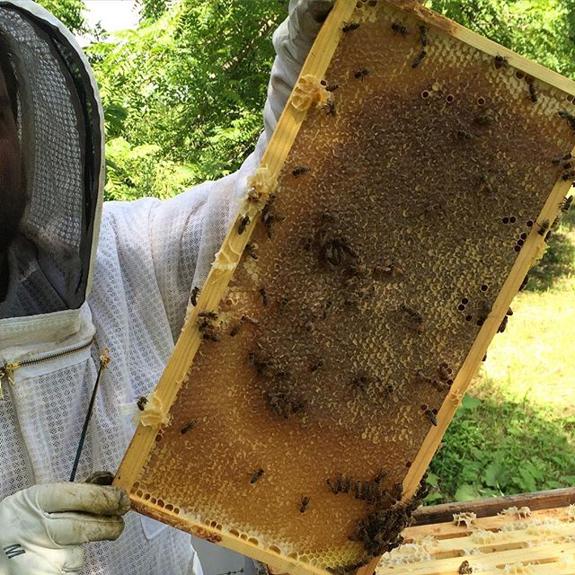 karl with honey frame, How to Find the Highest Quality Raw Honey - Advice from a Beekeeper | Whole-Fed Homestead