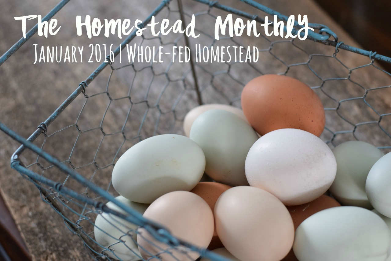Homestead Monthly: January 2016 {Winter chicken-keeping, kitchen update and bee poop}